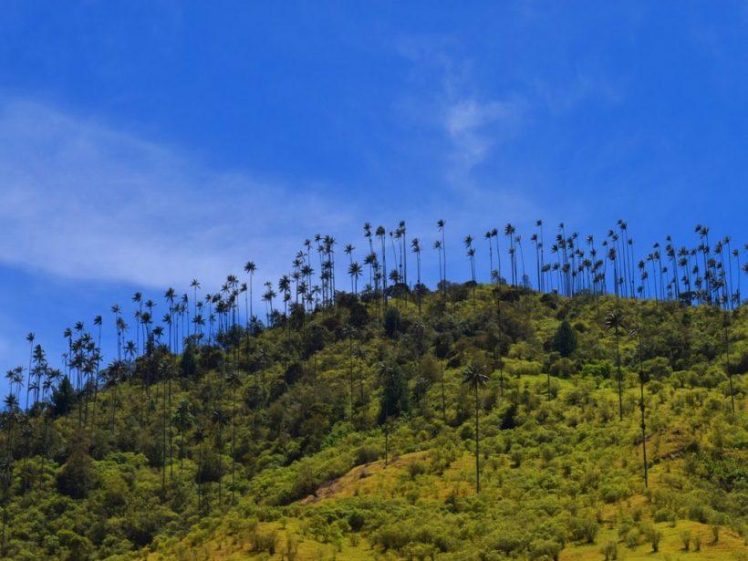 Valle de cocora kolumbien