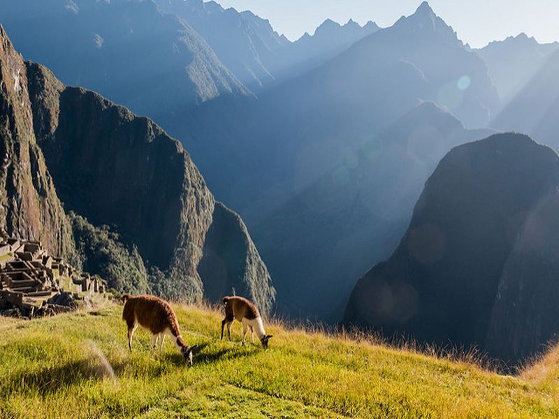inka trail animales